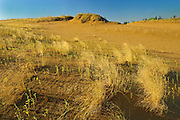 Sand dunes of the Carberry Desert<br /> Spruce Woods Provincial Park<br /> Manitoba<br /> Canada