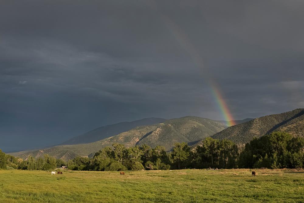 Horses in a meadow under a rainbow in Salida, Colorado