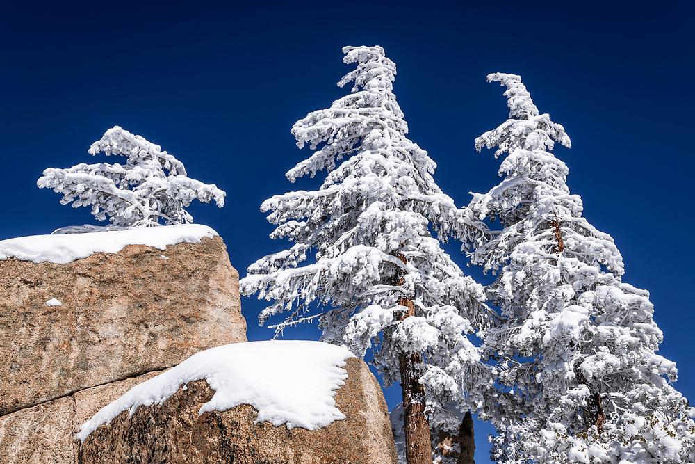Snow covered pines and boulders in the San Bernardino Mountains, San Bernardino National Forest, California USA