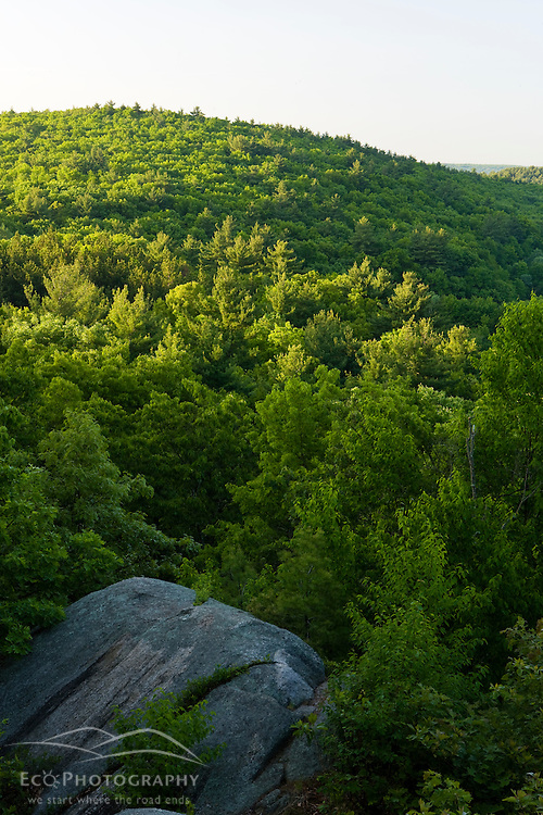 Forest View from Lookout Rock in Blackstone River and Canal Heritage State Park, Uxbridge, MA. Worcester County.