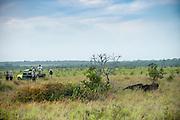 Giant Anteater (Myrmecophaga tridactyla)<br /> Karanambu Lodge<br /> Rupununi<br /> GUYANA<br /> South America<br /> RANGE: Central & South America<br /> CITES II listed as vulnerable
