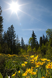 """Sunshine on Mule Ears"" - These Mules Ears were photographed near Lake Tahoe, CA."