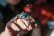 CHANGCHUN, CHINA - NOVEMBER 18: (CHINA OUT) <br /> <br /> Dancing Teacher Performs With Poisonous Creatures<br /> <br /> A scorpion climbs on Tian Jiashi\'s hand  on November 18, 2015 in Changchun, Jilin Province of China. 33-year-old dancing teacher Tian Jiashi has been fascinated and fed scorpions, vipers, centipedes, lizards and spiders at home for seven years in Changchun. Tian sometimes performed swallowing these poisonous creatures onstage even being bit hundreds of times. <br /> ©Exclusivepix media