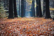 Nederland, Groesbeek, 7-11-2010Het was opnieuw een dag met mooi herfstweer. Herfstbos. Foto: Flip Franssen/Hollandse Hoogte