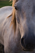 Portrait of a horse on a ranch in Victor, Idaho.