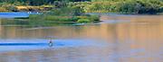 Fly Fisherman on the Missouri River Montana.