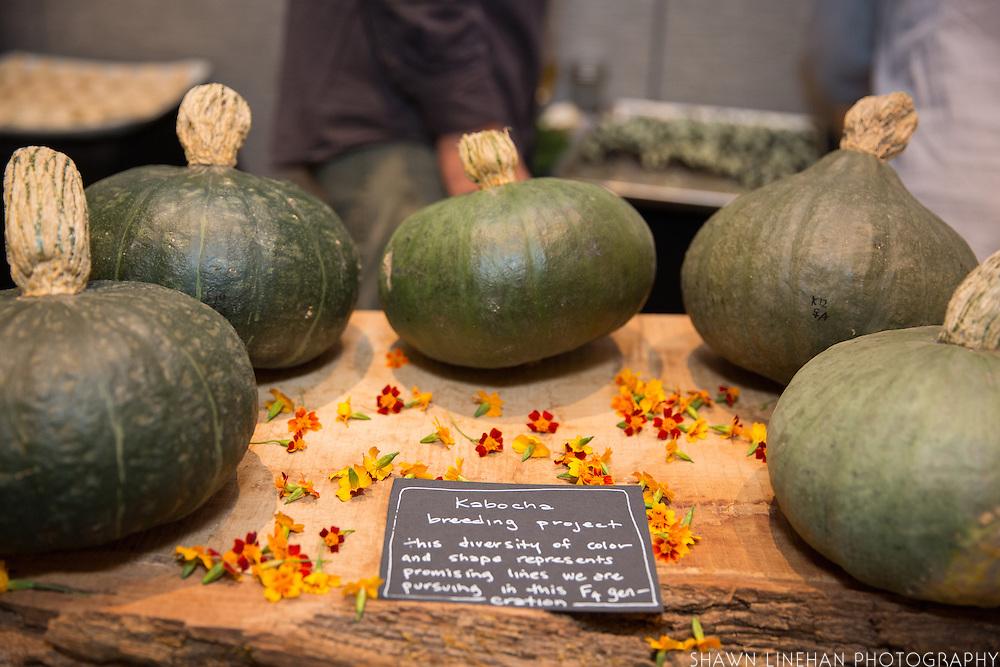 DILL, Anethum graveolens Showcase: 'Sighisoara Blue'<br />Seed Source/Grower: Uprising Seeds Chef: Erica Jennings, Uprising Seeds Dish: Dill Mascarpone-filled Prunes