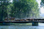 """LIVINGSTON, MT - AUGUST:  A cattle drive crosses a bridge during the filming of """"The Horse Whisperer"""" in 1997. (Photo by John Kelly/Getty Images)"""