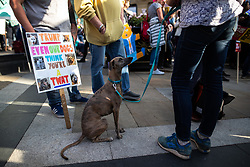 © Licensed to London News Pictures . 03/06/2019. Manchester, UK. A dog sits next to an EVEN OUR DOGS THINK YOU'RE A TWAT placard .  A Manchester Together Against Trump demonstration in Cathedral Gardens , central Manchester , during the first day of US President Donald Trump's visit to the UK . Photo credit: Joel Goodman/LNP