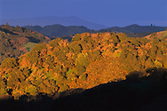 Stormy morning light on oak covered hills in Briones Regional Park, above Lafayette Contra Costa County, CALIFORNIA