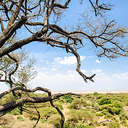 A view of Lake Manyara National Park from a partially elevated viewpoint, looking out over the flat bush.