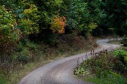 Tiger Mountain Road, Tiger Mountain, Issaquah, Washington, US