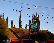 Pigeons flying over Caruso's on 4th Avenue near sundown