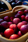 Fresh South Carolina plums at an organic local produce farmers market in Marion Square in Charleston, South Carolina (photo by Charleston SC photographer Richard Ellis)