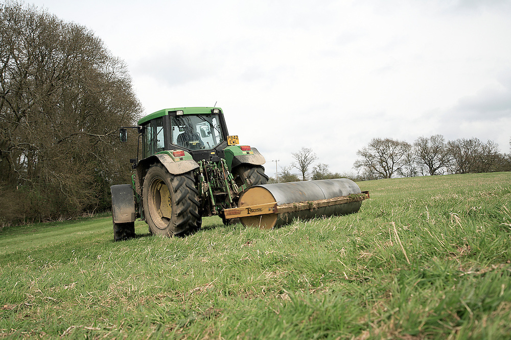 Tractor rolling field for hay production in spring