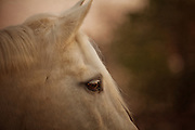 A close up of a horse's face.