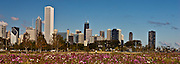 Wildflowers in bloom on Chicago's Northerly Island backdropped by the Chicago Skyline