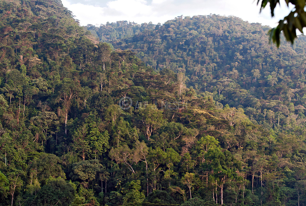 The rainforest of the magnificent Bwindi Impenetrable National Park, Uganda.