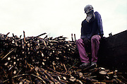 A sugar cane worker takes a rest from the exhausting work of harvesting, near Manizales, Caldas.