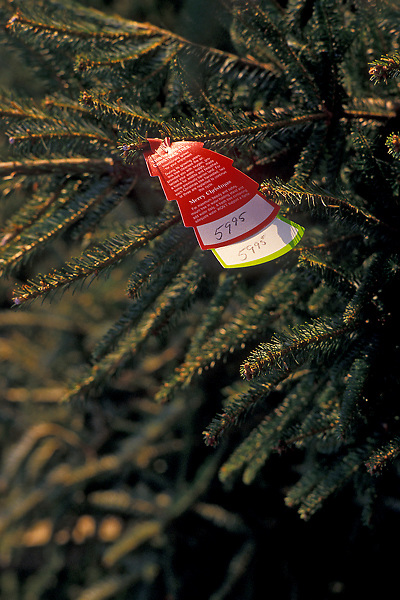 Stock photo of a Christmas tree for sale