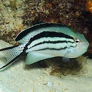 nhabit reef; picture taken West Papua, Triton Bay, Indonesia