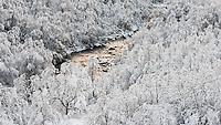 Rennende vann og nysnø på trærne. Den første snøen. Øvstabødalen, Rogaland.