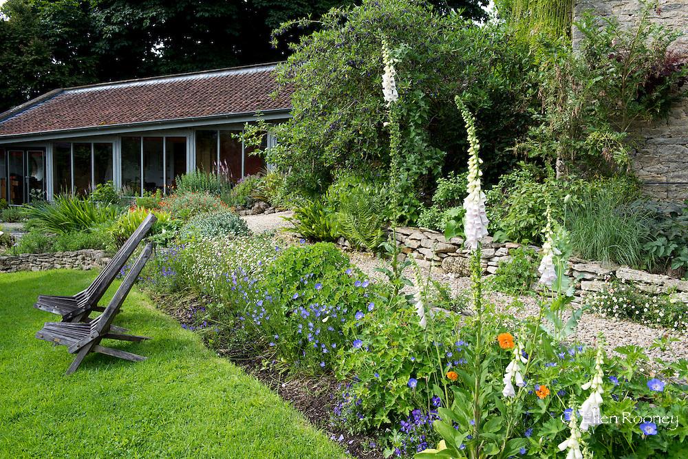 A border of Digitalis 'Pam's Choice, Geranium 'Rozanne' and Erigeon karvinskianus (Mexican daisy) in Derrry Watkins' Special Plants Garden, Cold Ashton, Chippenham, Somerset, U.K>