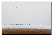 Misty morning in Kaziranga National Park, India. Nikon D850, 70-200mm @ 140mm, f2.8, 1/640sec, ISO800, Manual modus