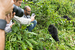 Viewing Mountain Gorillas