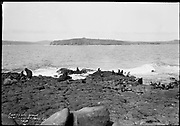 "9707-K199. written on original negative: ""Fur seals and sea lions. St. Paul Is. CLA"" St. Pauls Island. Pribilof Group. July 11, 1919"
