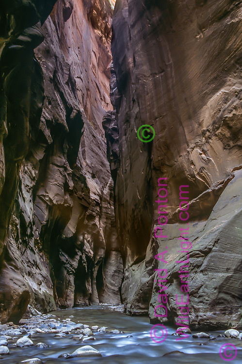 The Virgin River is wall to wall even at low water in the Zion Narrows. © David A. Ponton