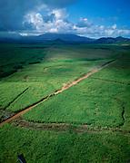 Truck, Sugar Cane field, Kauai<br />