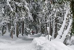 THEMENBILD - Personen bei einer Winterwanderung rund um den Schwarzsee, aufgenommen am 10. Jänner 2019, Kitzbuehel, Oesterreich // people on a winter hike around the Schwarzsee at Kitzbuehel, Austria on 2019/01/10. EXPA Pictures © 2019, PhotoCredit: EXPA/ Stefan Adelsberger
