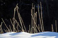 2013 Goosepond Mountain State Park Winter Scenes