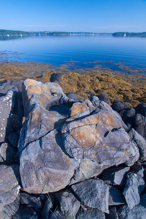 Granite and Sea Weed, Sheep Island, Castine, Maine, US