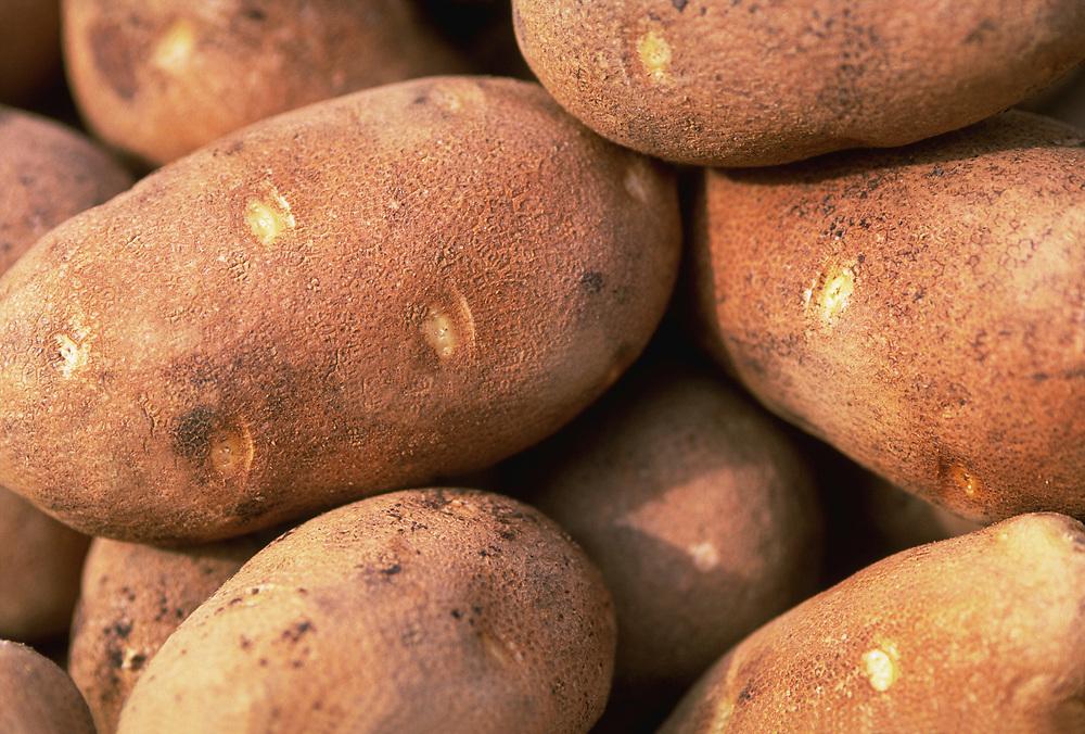Close up, selective focus photograph of a group of Idaho Russet potatoes