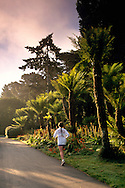 Female jogger and Fern Tree Garden in Golden Gate Park, San Francisco, California