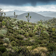 Renewal in the Desert