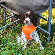 2018 Cocker Spaniel Hunting Enthusiasts of SE WI Hunt Test | 7/28/2018