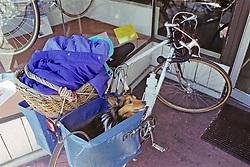 Collie In Bike Bag Carrier