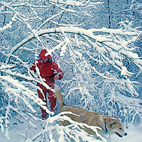 Meredith Wiltsie & her dog Taiga hike through a forest after a snowstorm in the eastern Sierra Nevada.