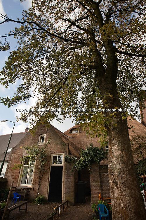 engelen,deze boom veroorzaakt overlast op het dak van terp 1
