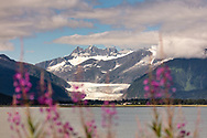 Fireweed (Epilobium angustifolium) frame the Mendenhall Glacier near Juneau in Southeast Alaska. Summer. Afternoon.