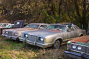 Ford auto limos in graveyard of abandoned rusty old American automobiles, MIssissippi, USA