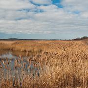 Grasses at the Parker River National Wildlife Refuge, Newbury, MA