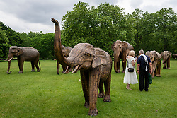 © Licensed to London News Pictures. 17/06/2021. LONDON, UK.  People view some of the 100 wooden elephants on display in Green Park, part of the CoExistence herd.  Handcrafted from a natural plant material called Lantana camara, the wooden elephants are currently on an installation tour of the UK to highlight a crowded planet and human encroachment on wild places.   Photo credit: Stephen Chung/LNP