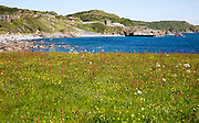 Wildflower meadow at Lowland Point, Lizard Peninsula, Cornwall, England, UK