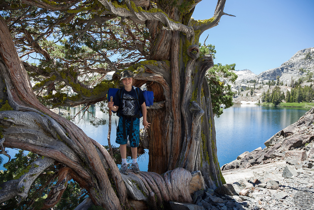 """""""Boy at Heather Lake"""" - This boy was photographed standing in a tree while backpacking at Heather Lake in the Tahoe Desolation Wilderness."""