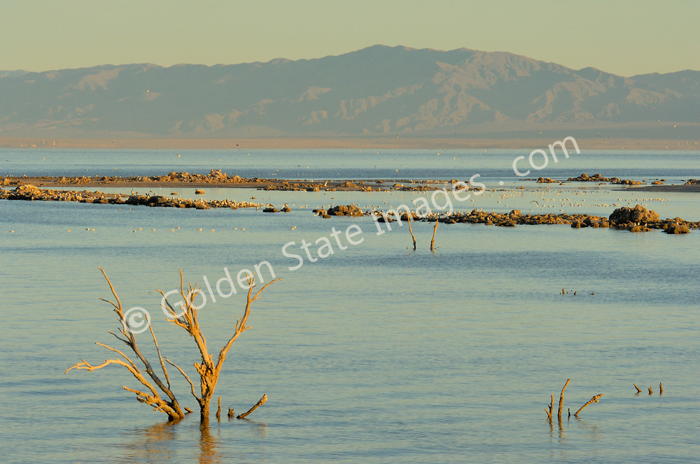 The Salton Sea Basin is an eight thousand square mile closed sub-sea level basin in the low desert of southern California. <br /> <br /> Up until 1905 the Salton Sea basin was a vast dry lake which had held water several times in the past thousand years. In 1905 after an abnormally heavy winter season of rainfall and then snowmelt the man made Imperial Valley dike was breached. The flow from the Colorado River took nearly two years to be controlled. The result was todays Salton Sea.  <br /> <br /> The Salton Sea continues to shrink due to evaporation. The water which is left is ever more saline.
