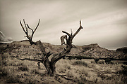 Ghost Ranch, Abiquiú, NM.